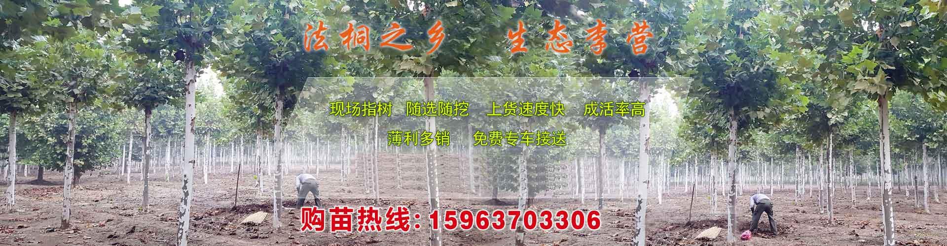 济宁千木园林有限公司